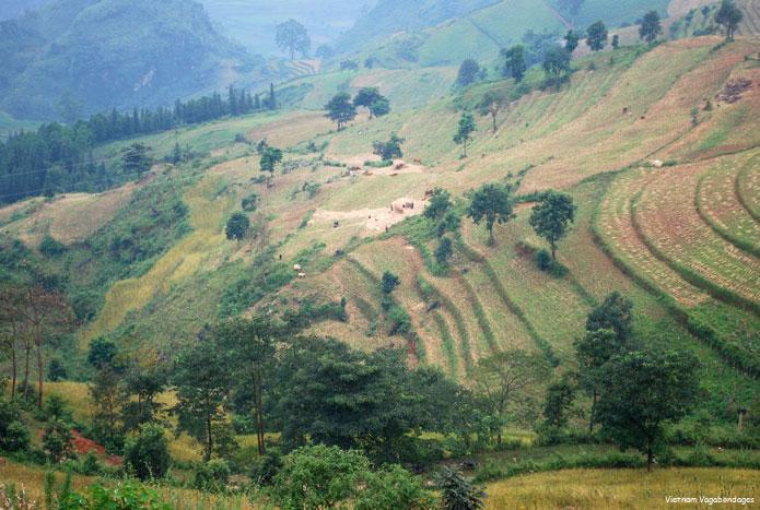 BacHa -HoangSuPhi-ThacBa