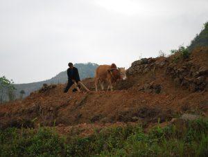 voyage meo vac vietnam