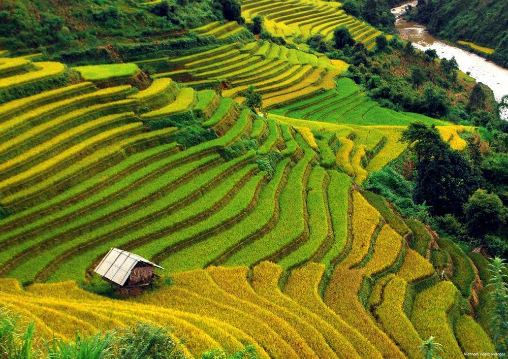 choisir meilleur saison voyager au Vietnam